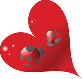 Amor do Ladybug Fotos de Stock Royalty Free