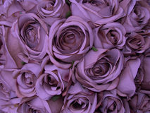 Amor doce Foto de Stock Royalty Free