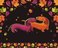 Amor dos Dachshunds Fotos de Stock Royalty Free