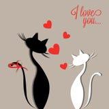 Amor dos gatos Fotografia de Stock
