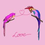 Amor dos papagaios Fotografia de Stock Royalty Free