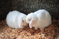 Amor e beijo Imagens de Stock Royalty Free