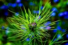 Amor-Em--névoa selvagem Foto de Stock Royalty Free