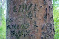 Amor en el árbol Foto de archivo libre de regalías
