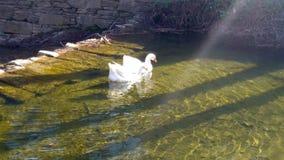Amor en el río Foto de archivo