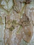 Amor en el tronco de árbol Imágenes de archivo libres de regalías