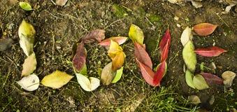 Amor en hojas Imagenes de archivo