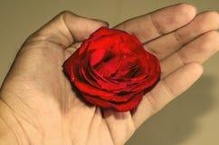 Amor en su mano imágenes de archivo libres de regalías