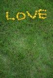 Amor escrito en flores del diente de león Imagen de archivo libre de regalías