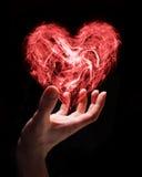 Amor frágil Imagens de Stock