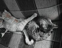Amor fraternal Foto de archivo