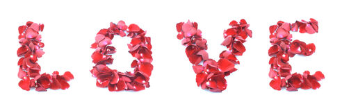 Amor hecho de la rosa aislada en el fondo blanco Foto de archivo libre de regalías