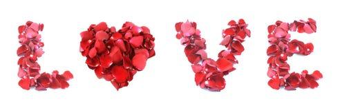 Amor hecho de la rosa aislada en el fondo blanco Imagen de archivo