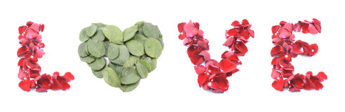 Amor hecho de la rosa aislada en el fondo blanco Imágenes de archivo libres de regalías