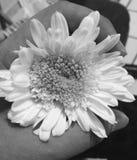 Amor joven Foto de archivo
