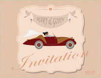 Amor luxuoso! Imagens de Stock Royalty Free