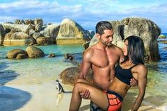 Amor, músculos e pinguins: Praia dos pedregulhos Foto de Stock