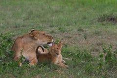 Amor maternal Imagens de Stock
