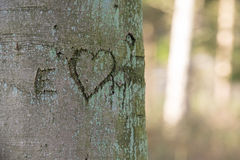 Amor na árvore Imagem de Stock