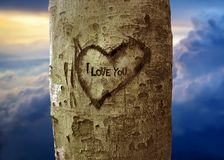 amor na árvore Imagens de Stock Royalty Free
