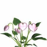 Amor na flor 5 Imagens de Stock