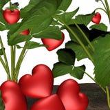 Amor na flor 6 Imagem de Stock