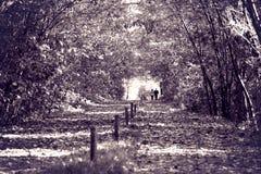 Amor nas madeiras Imagem de Stock Royalty Free