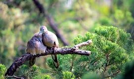 Amor no jardim Imagem de Stock