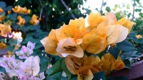 Amor no jardim Imagens de Stock