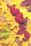 Amor no outono Dois corações no fundo das folhas Modo do outono Vendas sazonais Feriado do outono Folhas caídas Fundo do outono imagem de stock