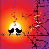 Amor, pájaros que se besan en la ramificación Imagen de archivo libre de regalías