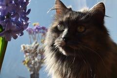 Amor puro Gato Imagenes de archivo