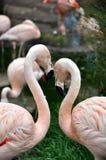 Amor rosado Imagenes de archivo