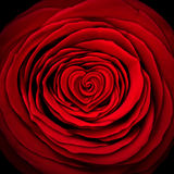 Amor Rose Concept Imagem de Stock Royalty Free