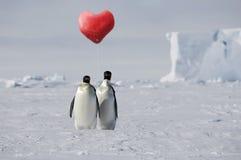 Amor verdadeiro do pinguim imagens de stock