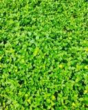 Amor verde HD de la naturaleza del papel pintado imagen de archivo
