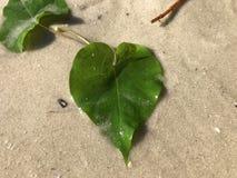 amor y hojas en forma de corazón de la vid de ferrocarril y del x28; vine& x29 de la perla; I imagenes de archivo