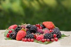 Amora-preta fresca, framboesa, corinto vermelho e morango na tabela em um fundo da folha Fotografia de Stock