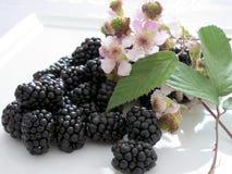 Amoras-pretas e flores Fotografia de Stock Royalty Free