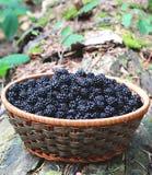 Amoras-pretas frescas em uma cesta Imagens de Stock