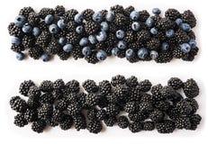 Amoras-pretas maduras e mirtilos isolados no fundo branco Bagas pretas e azuis em um branco Bagas na beira da imagem com imagem de stock royalty free