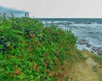 Amoras-pretas no mar Fotos de Stock