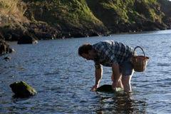 Amorce contagieuse de poissons Image stock