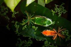Amorce de grenouille photo stock