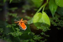 Amorce de grenouille photographie stock