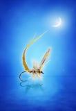 Amorce de nymphe de mouche de mai Image libre de droits