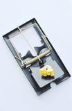 Amorce de piège de souris de fer par la graine de maïs sur le fond blanc Images libres de droits