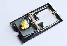 Amorce de piège de souris de fer par la graine de maïs sur le fond blanc Photographie stock