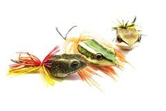 Amorce de poissons Image libre de droits