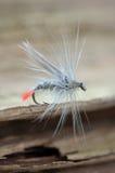 Amorce de poissons Image stock